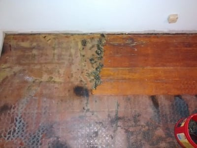 Floor Glue Remover